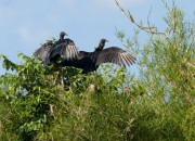 Aguacate-Birding